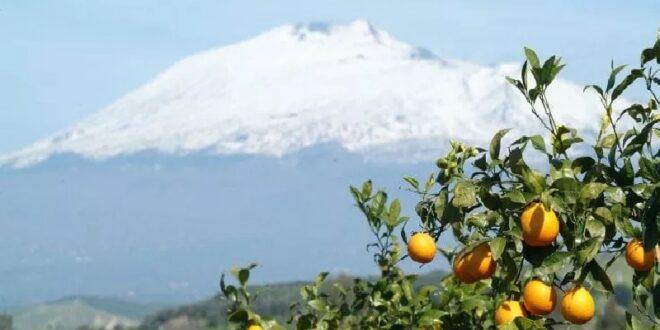 Liquori dell'Etna